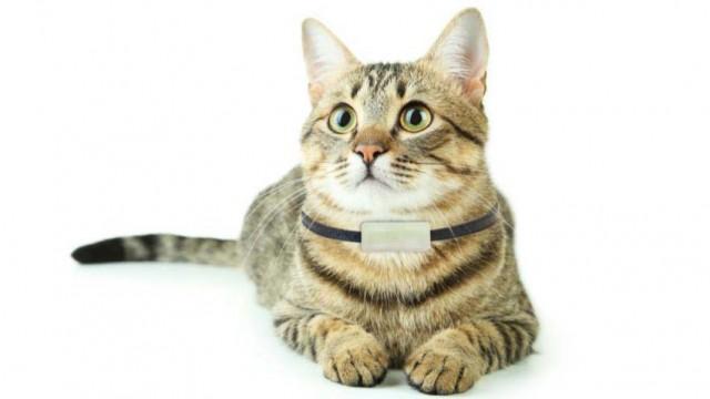 Телефон для кошки с трекером